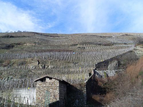 stjelje vinmaker i Côte-Rôtie, nordlig rhône