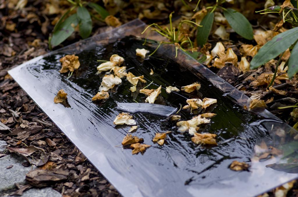 olie-plastik-rhodendendron